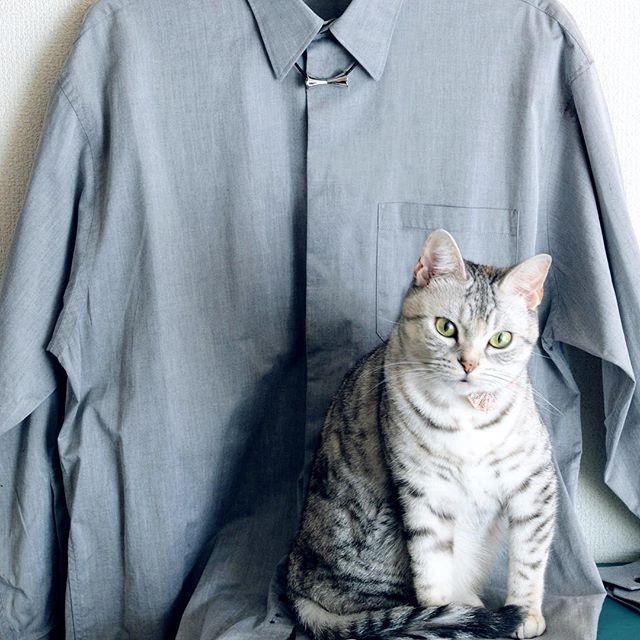 My #caturday workwear.  #cat #necklace #silverjewelry #silverjewellery #silvernecklace #swingdesignstudio #ねこ #ネックレス #ねこ部 #ネックレス