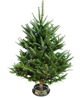 48 Best Christmas Urns Images On Pinterest Diy Christmas
