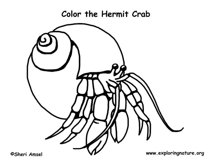 70 best Color Animals images on Pinterest  Coloring pages About