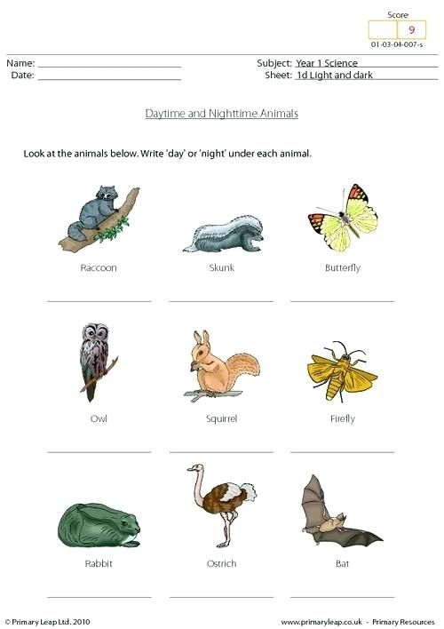 Printable Science Worksheets For Grade 8 Daytime And Nighttime