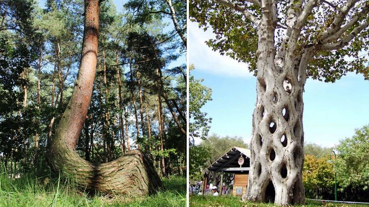 Crooked Forest Tourism, Poland - Next Trip Tourism