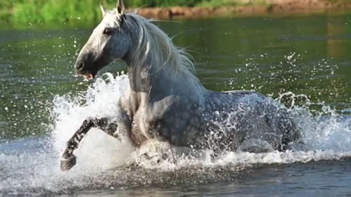 ღ♘ღ Группа Для любителей лошадей ღ♘ღ - лошади в воде   OK.RU
