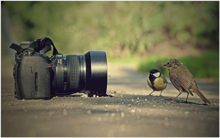 Birdcam HD Wallpaper | birdcam hd wallpaper 1080p, birdcam hd wallpaper desktop, birdcam hd wallpaper hd, birdcam hd wallpaper iphone