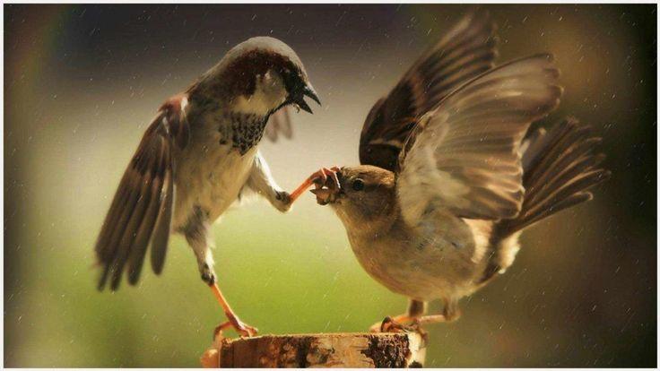 Two Birds Funny Wallpaper | two birds funny wallpaper 1080p, two birds funny wallpaper desktop, two birds funny wallpaper hd, two birds funny wallpaper iphone