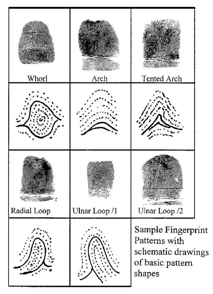 three general fingerprint pattern types There are three main fingerprint patterns: any fingerprint pattern which contains 2 or more deltas will be a whorl pattern there are four types of whorl patterns.