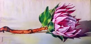 Image result for protea and daisy pictures to colour