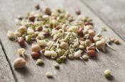 Alfalfa, fenugrec, tournesol, quelles graines germées choisir pour quels bienfaits