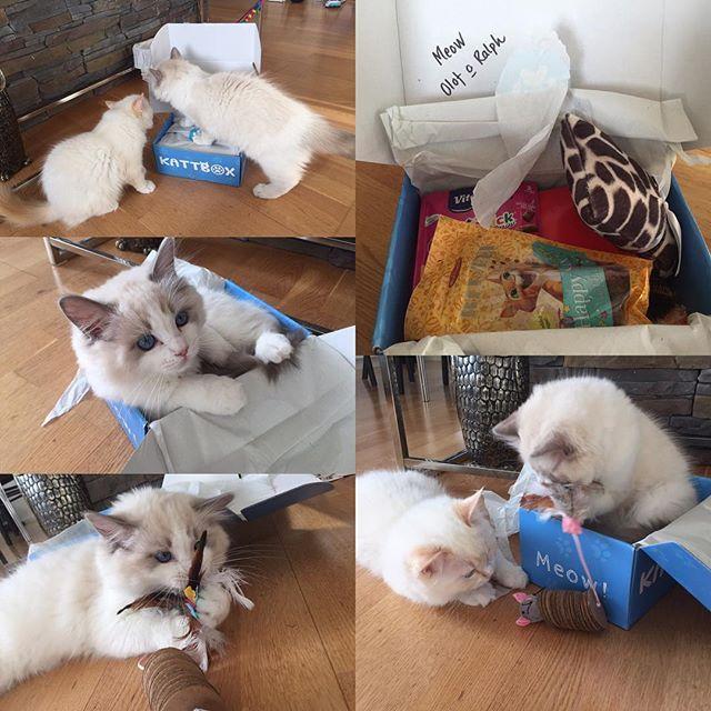 Fick hem min första kattbox idag, så mycket fina saker och Olof och Ralph var nog lika spända som jag över att se innehållet. Tack @kattbox_se för alla fina saker :) killarna blev  jätte nöjda! #kattbox