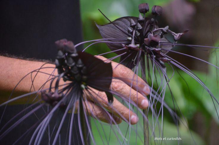 Visiter le jardin des Parfums et des Epices à Saint Philippe (sud de l'île de la Réunion) et découvrir la flore de l'île. #voyage #outre-mer #vanille
