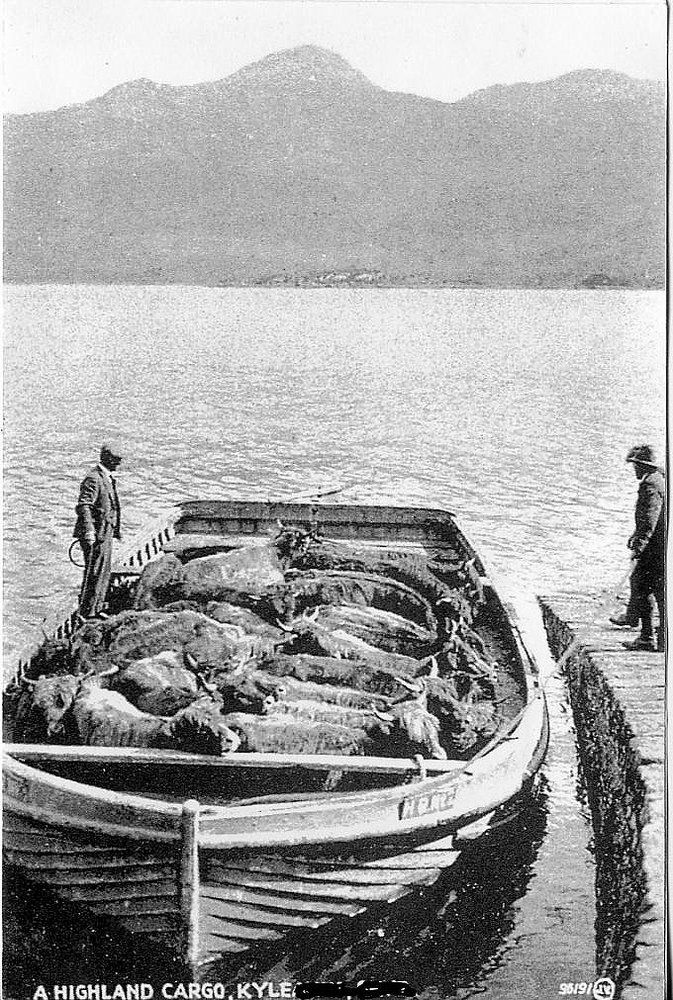 This photograph shows HIghland cattle arriving at Kyle of Lochalsh from Kyleakin on the Island of Skye in a Highland Railways barge, HR No. 2. The cattle were landed at a point behind the Lochalsh Hotel. Cattle reared on Skye were sold at cattle fairs and markets on the island before heading to bigger fairs at Crieff or Falkirk, and eventually to the English market.