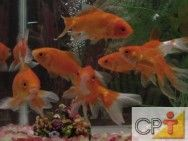 Espécies de peixes ornamentais #alcanceosucesso