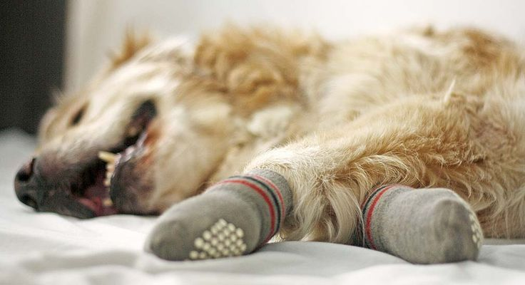 Dein Hund rutscht beim Laufen auf Laminat oder glatten Böden aus? Du weißt nicht, wie Du ihm helfen kannst? Die Lösung: Anti Rutsch Socken!