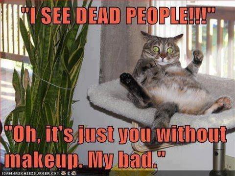 Funny Short People Meme : Winn dixie memes home facebook