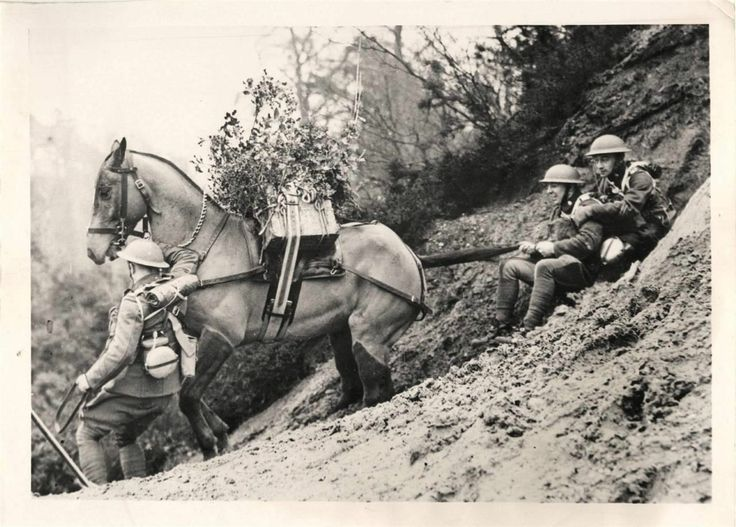 163 best WW1 Animals images on Pinterest War horses, World war - i have no objection