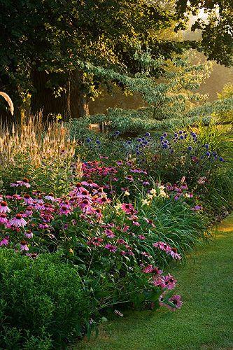 Pettifers, oxfordshire: The klimt border with echinacea purpurea, echinops ritro 'veitchs blue' and cornus controversa variegata