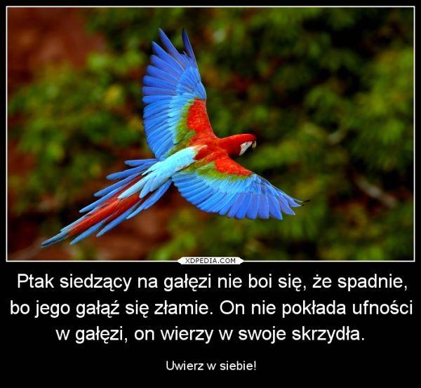 Ptak siedzący na gałęzi nie boi się, że spadnie, bo jego gałąź się złamie. On nie pokłada ufności w gałęzi, on wierzy w swoje skrzydła. Uwierz w siebie! (1100)