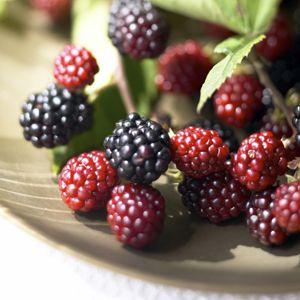 Raspberries: A Growing Guide: Fruit Gardens, Organizations Gardens, Organizations Raspberries, Wild Blackberries, Growing Raspberries, Raspberries Blackberries, Growing Berries, Growing Guide, Raspberries Plants