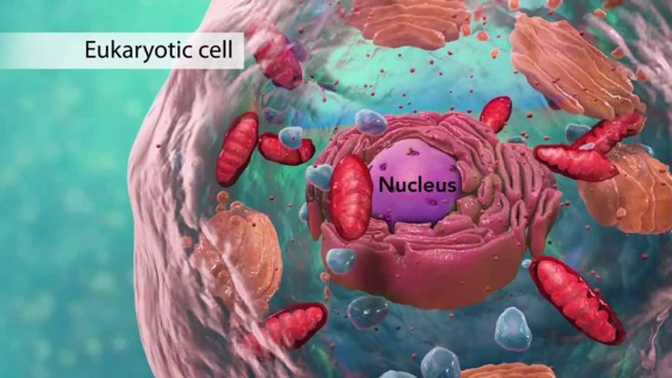 Video explaining cell structure.