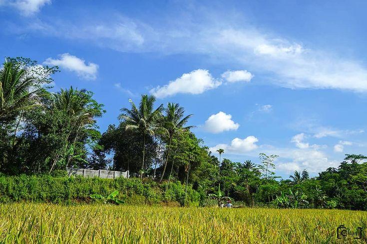 Selamat tahun baru 2018. salam dari petani di sawah Cibadak Sukabumi . . . @b.i_art  @benggs_irawan . #landscape #landscapeindonesia #landscapes #landscaper #sukabumi #exploresukabumi #cibadak #petani #sawah #hijau #photography #photo #sony #sonya7r #zeiss #wide #mirorless #jalanjalanmen #pesonaindonesia #wonderfullindonesia #photoshoot #amazingindonesia #photooftheday #bestoftoday #instagood #likeforlike #followforfollow #thanks #ronyrom