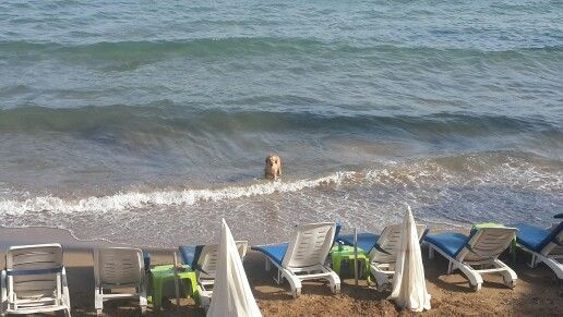It's a dog's life at Side town beach