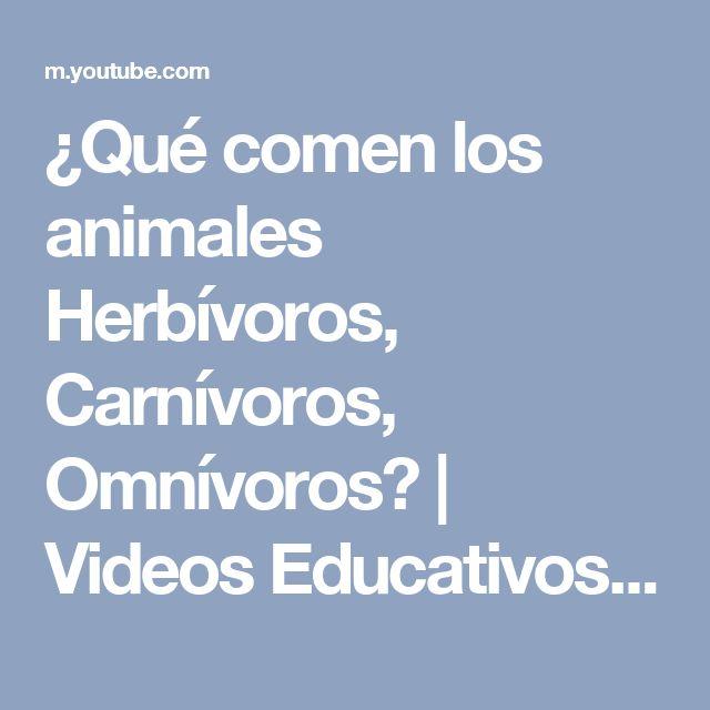 ¿Qué comen los animales Herbívoros, Carnívoros, Omnívoros? | Videos Educativos para Niños - YouTube
