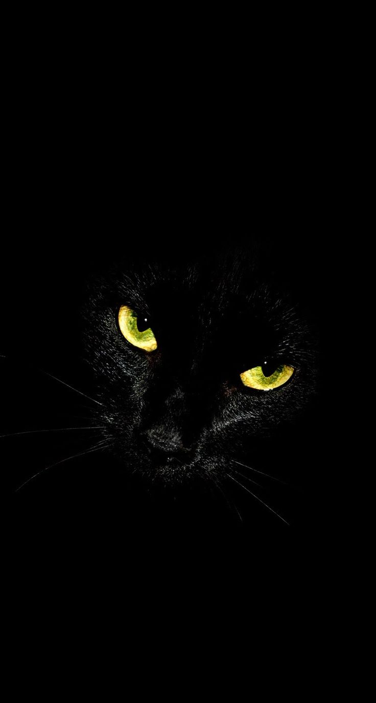 Black Cat Glowing Eyes IPhone Wallpaper Background