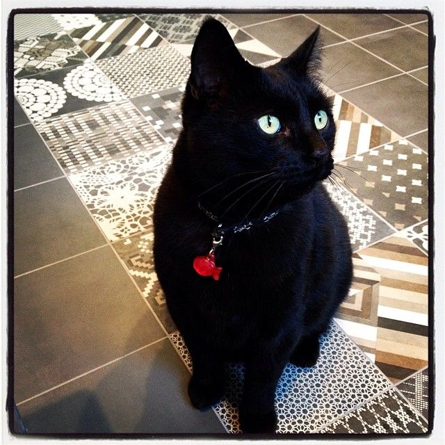 My cat on our new Azulej floor tiles (by Mutina).