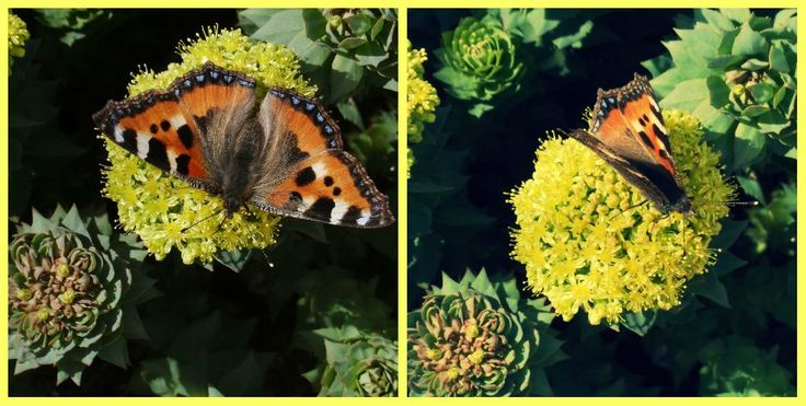 In early summer butterfly sat on the plant.