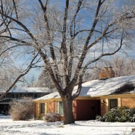 Prepare your trees for winter in 6 steps.