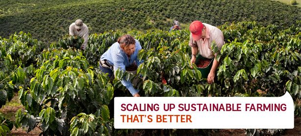 My social media assignment for UTZ Certified (Better farming. Better future): advising on social media and creating a social media strategy #socialmedia #sustainability #fairtrade #UTZ #chocolate