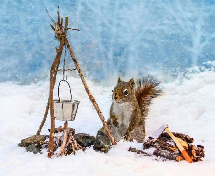 This is so very cute. I have squirrels who visits me from the little forest nearby. They used to jump from a special tree to my garden. That tree went down after a hurricane. Now they cross the asphalt path to come into my garden. I love them so. / Catilda - - - - -  Preparando el fuego