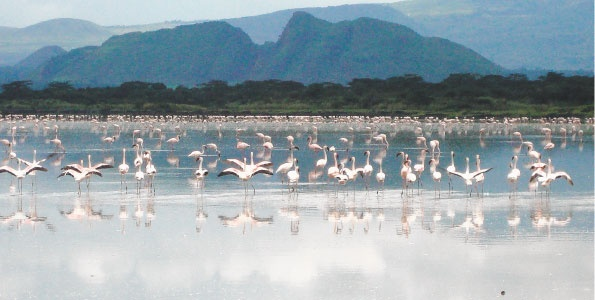 Lake Elementaita, Kenya