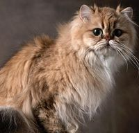If Jeremy really wants a cat, I hope for my sake he gets one like this :)