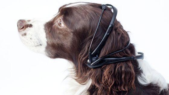 @Arion_ES No digas guau,di hola!Presentan un traductor del pensamiento de los #perros al lenguaje humano!http://tecnologia.elpais.com/tecnologia/2014/01/22/actualidad/1390383053_367250.html …