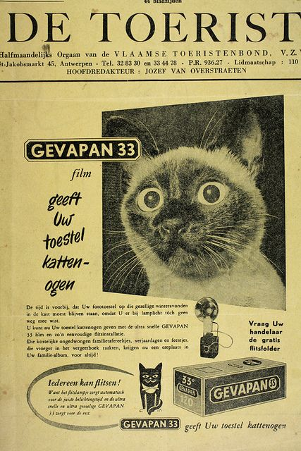 """Ad for Gevapan film.  'I think this translates from Flemish as': """"Gevapan 33 film gives your camera cat eyes."""" S)"""