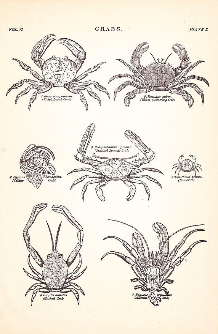 24 best antique animal illustrations images on pinterest animal