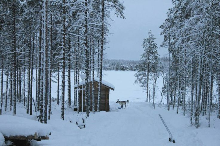 Snow in Hossa, Finland. Reindeer next to the sauna :)