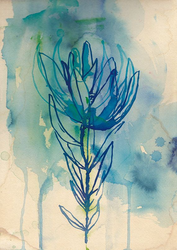 Blue Wash Protea fine art print - a Sweet William illustration on archival paper. Small and Medium size on Etsy, $14.27