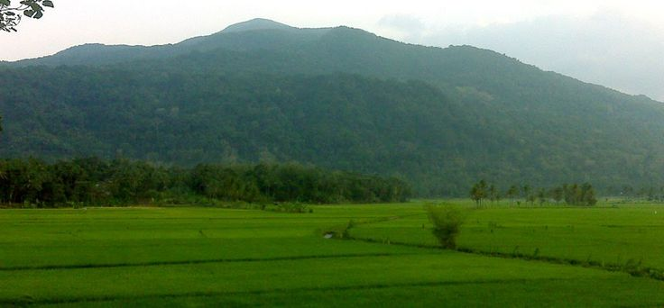 Paddy field in Buah Dua Sumedang with a view of Mount Tampomas