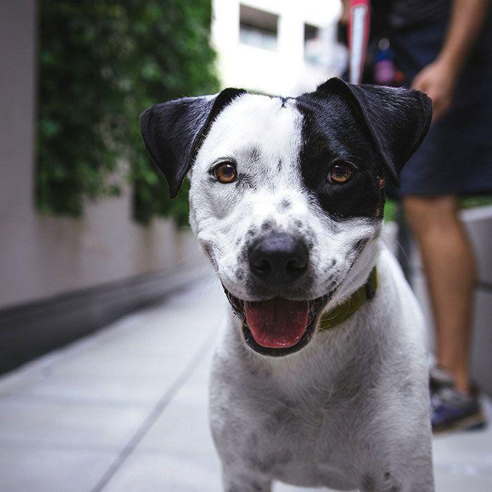 """¡NUEVO RETO!  Este año colaboramos con el Centro de Protección Animal de  Zaragoza en su evento """"Zarapeluda."""" Por eso hemos lanzado un reto muy especial """"Reto Perruno."""" :)  Hazte una foto con tu perro, participa en el reto y ¡gana un lote de productos para tu mascota! :)"""