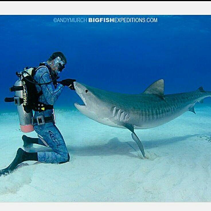 @andymurch #bigfishexpeditions.com