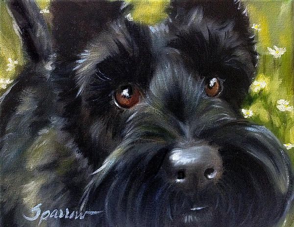 Scottish Terrier Art by Mary Sparrow available for sale in multiple sizes and surfaces and cards at Fine Art America!