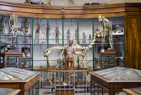 Conservatoire-anatomique-8