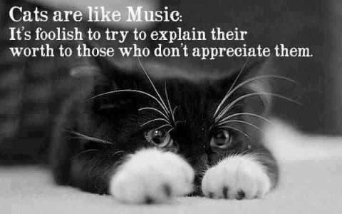 Cats are like Music. It's foolish to try to explain their worlth to those who don't appreciate them.