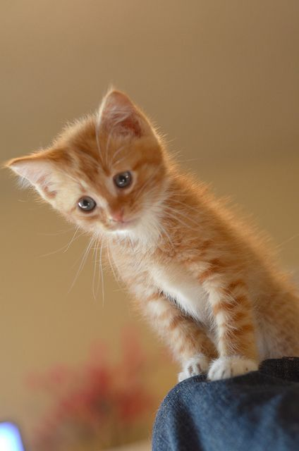 So cute! Reminds me of my Zoey when she was a kitten. Zoey is a climber & always curious.