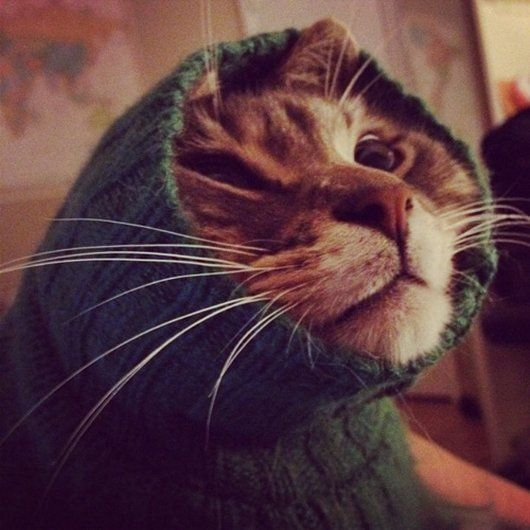 Best Sweaters For All Images On Pinterest Cats Colors And - 22 adorable animals wearing miniature sweaters