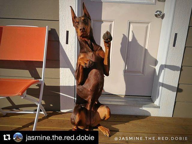 Single Ladies Raise Your Hands Dobergear Credit Jasmine The