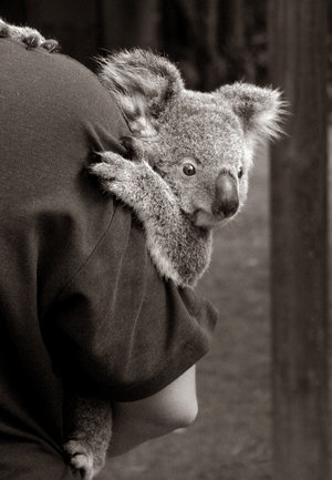 "I used to call my son ""my little koala"" because of how he used to hold on"