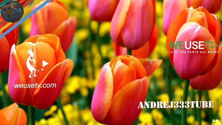 Il tulipano e i diserbanti