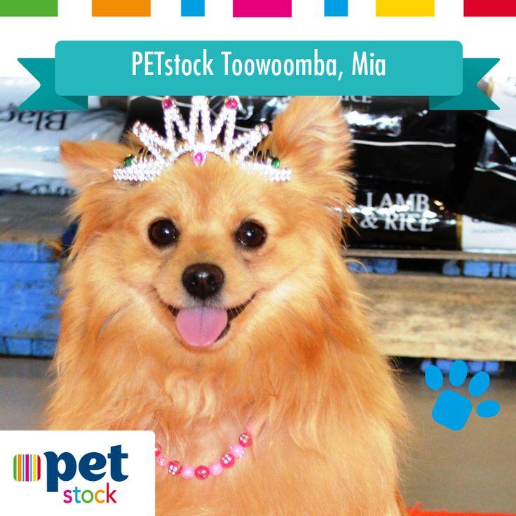 Mia the PETstock Toowoomba winner